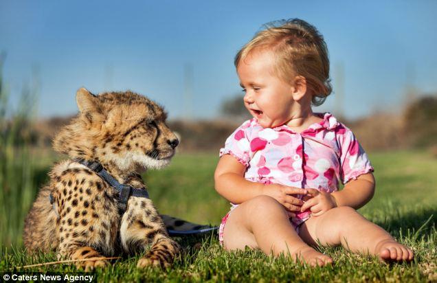 南非小兄妹与猎豹幼崽同生活(图) - 妮子 - 妮