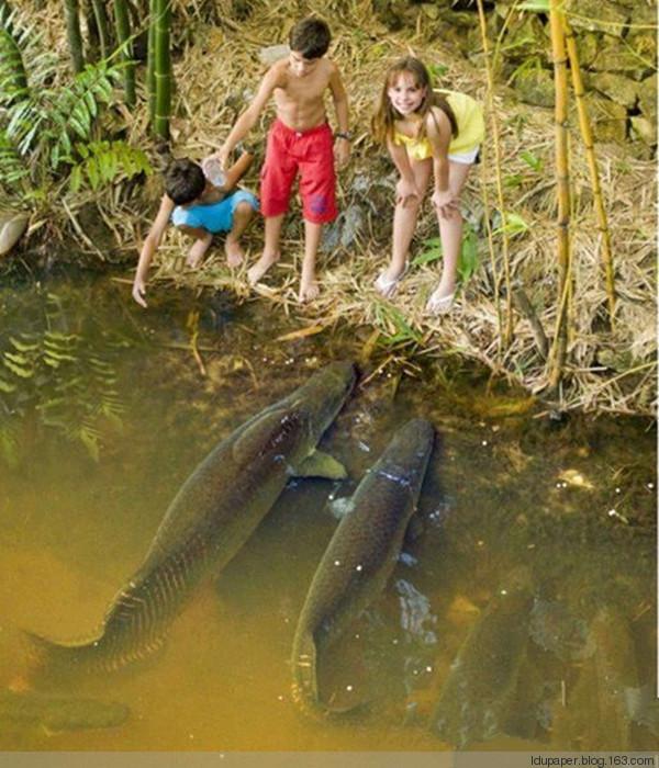 被家门口河里的大鱼震呆了 - 妮子 - 妮
